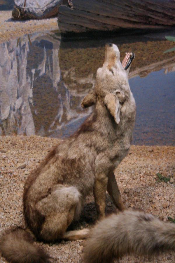 the howl by xxstrike0uttt