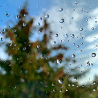 first raindrops ...