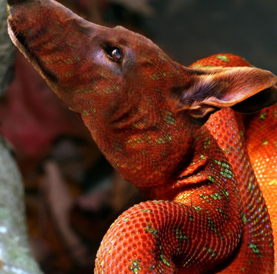 Python Snake Dog Costume - Litle Pups