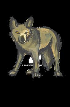 semi real wolf photo study
