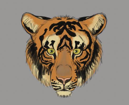 Tiger head profile study