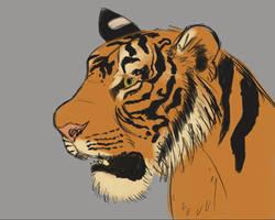 Tiger head the quarter view study