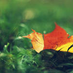 touch of autumn by topinka