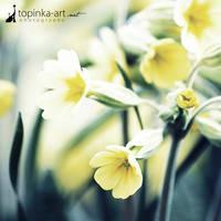 springtime VIII by topinka