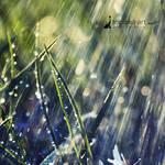 morning rain by topinka