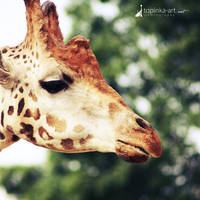friend from zoo X by topinka