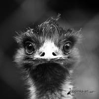 from ZOO by topinka