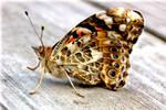 the flighty by Anzupfi