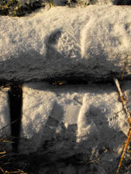 Snow prints