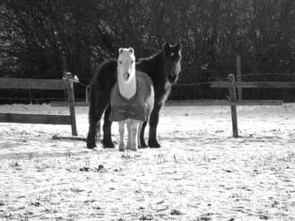 Horses b and w