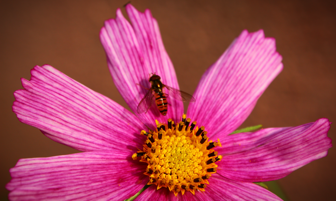 insect_on_a_flower_by_bargman-dbkokqz.pn