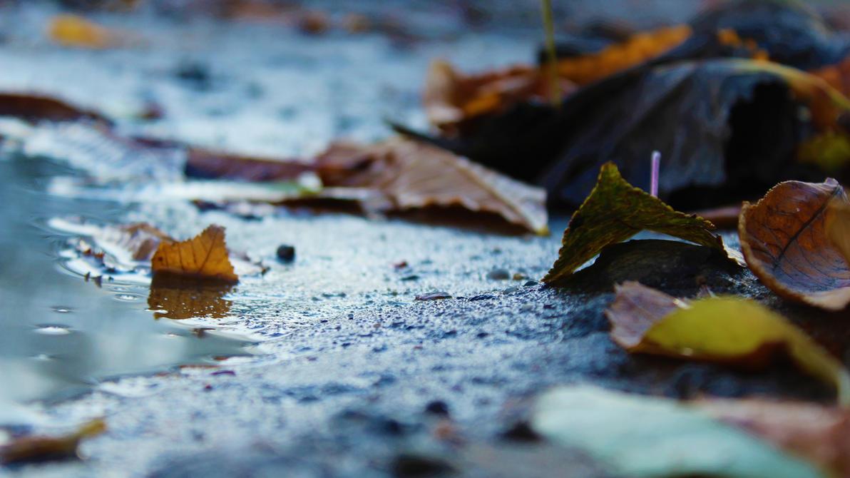 leafs_in_the_mud_by_bargman-dbtqe6w.jpg