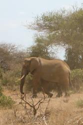 Elephant by Barwickian