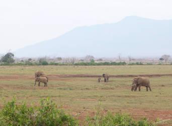 Elephant Herd by Barwickian