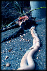 Dead Kitty X_X by VampirGoth
