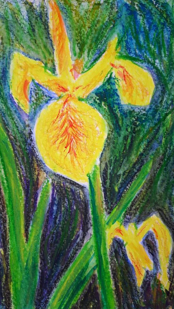 Yellow Irises by davepuls