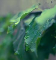 after rain .. by nurutheone