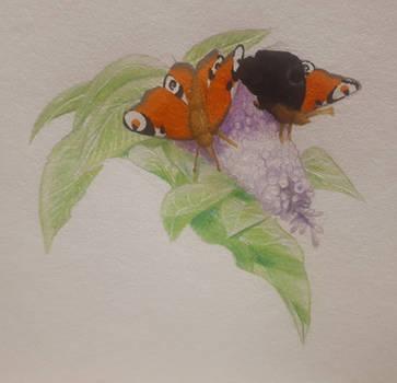 Butterflies by moryonenn