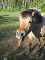 Tired horse by SmulanGandur
