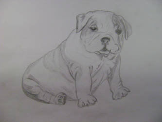 English Bulldog puppy by SmulanGandur