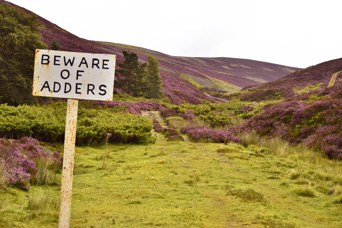 beware_of_adders_by_thejesspaige_d9il619