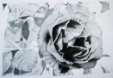 Inside a flower...