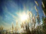 Summer Sunshine