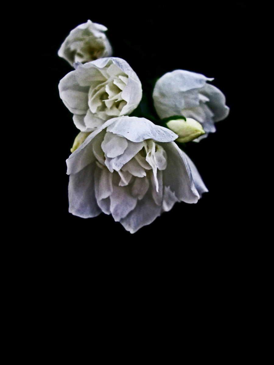Darkness of Flowers by darkmonkey78