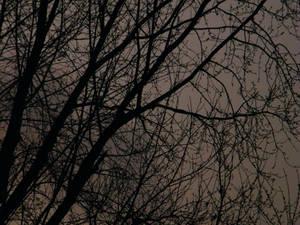 dark winter branches