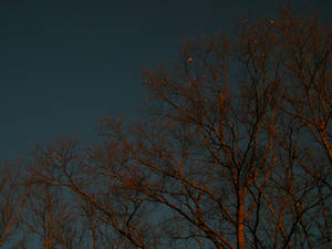 evening trees2