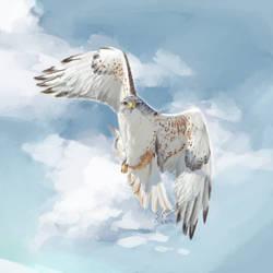 Ferruginous Hawk by rainfreezer