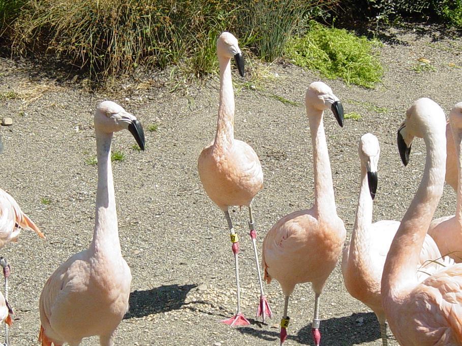 Flamingo 006 by Elluka-brendmer