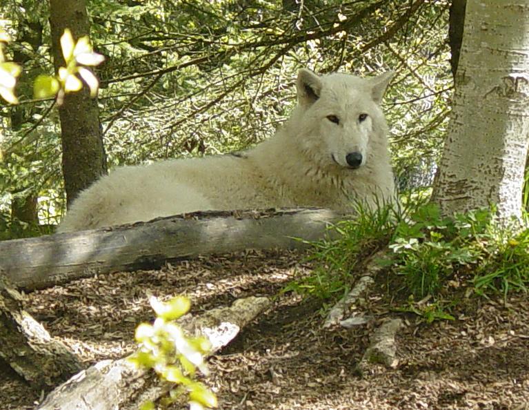 Wolves 021 by Elluka-brendmer