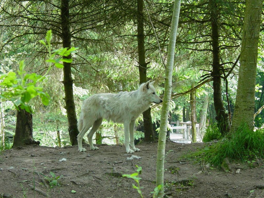 Wolves 027 by Elluka-brendmer