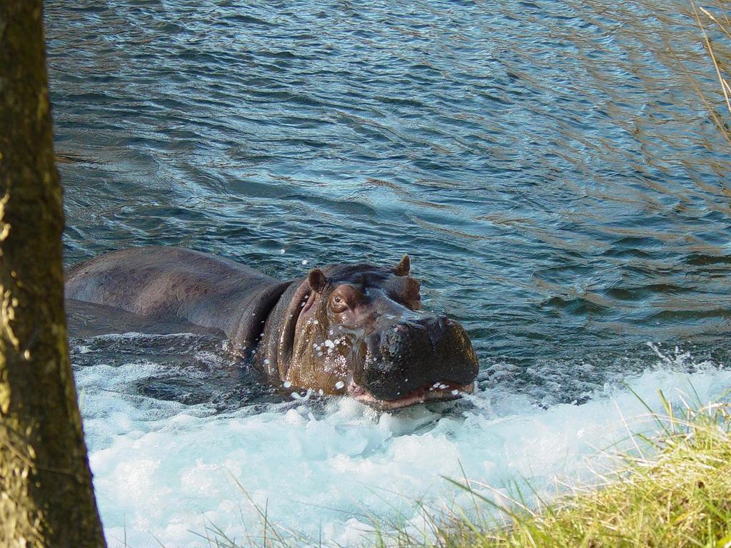 Hippo 008 by Elluka-brendmer