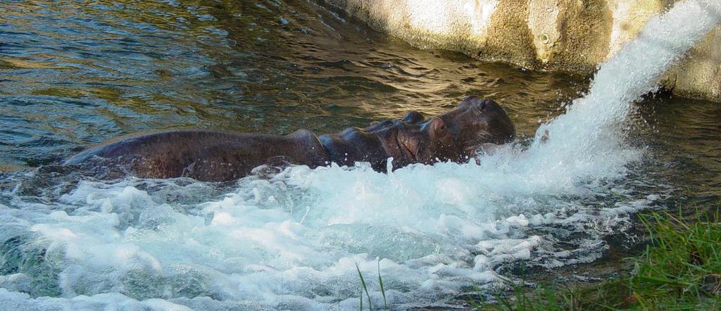 Hippo 012 by Elluka-brendmer