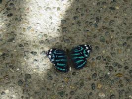 Butterfly 015 by Elluka-brendmer