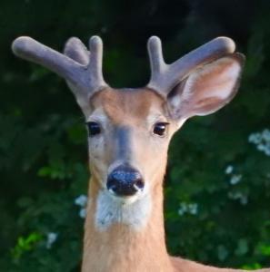 Elluka-brendmer's Profile Picture