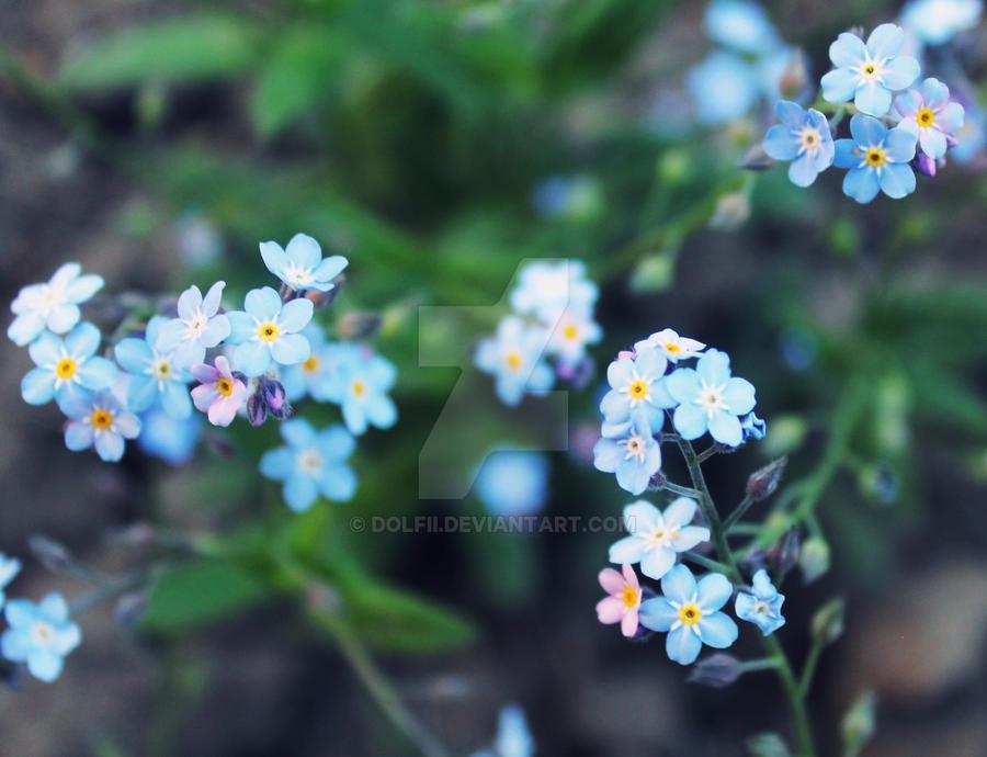Las flores bonitas by dolfii