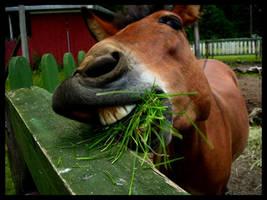 mule by avain