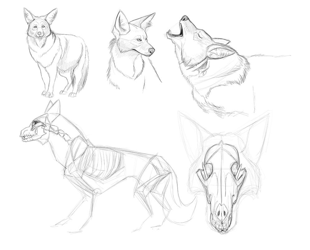 Coyote Reference Sketches - Character Design by secoh2000