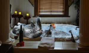 Rhino in a bath