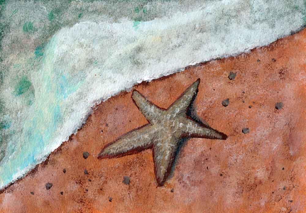 Starfish on beach by rev-Jesse-C