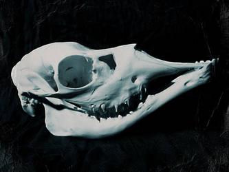 Fetal moose skull SOLD