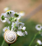 Flower and Snail by 6SyRy6