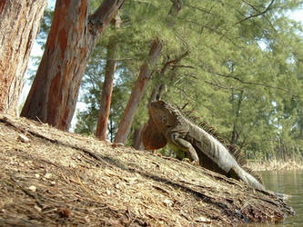 iguanadon by kitsolidor