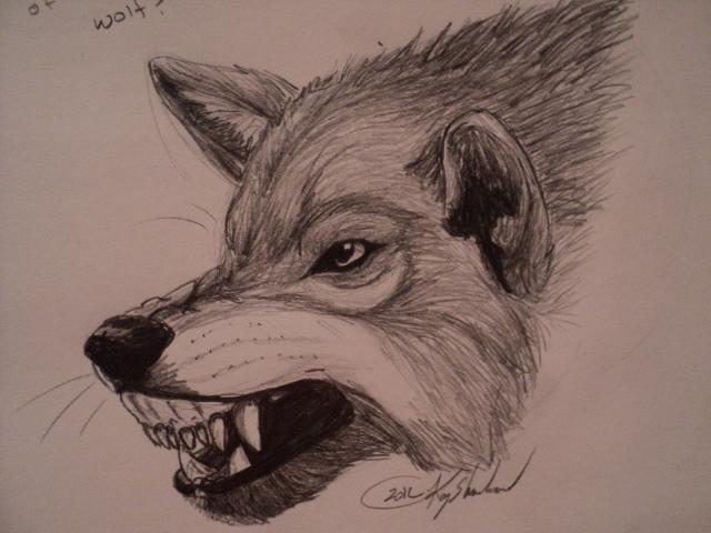 Wolf snarl by NAMEY-D0G on DeviantArt