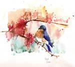 Night Bluebird - Pajaro Nocturno