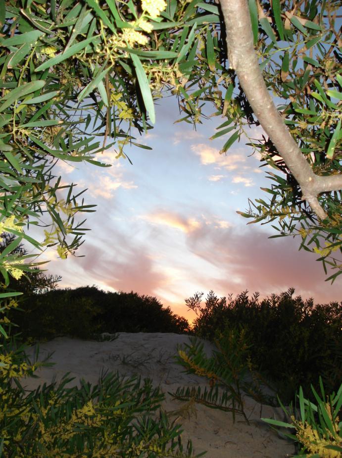 Cueva de acaciaS by solo1colgado