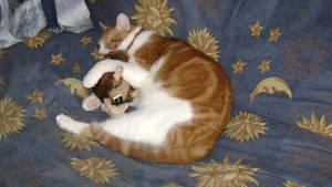 MY CAT SLEEPING.